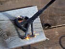 Flames of a Branding Iron by BettyEDuncan