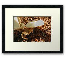 Mushroom on Log 2 Framed Print