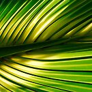 Palm Leaf - Paget Marsh by triciamary