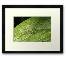 Daddy Long Legs Camouflage Framed Print