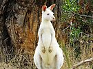 White Roo by Kayleigh Walmsley
