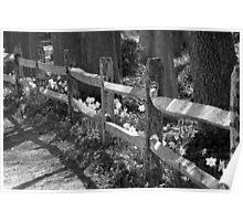 Daffy Fence~B&W Poster