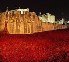 Poppies at the Tower of London -  Night Panorama by InterestingImag