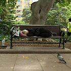 a nap. by nwd. funke