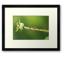 Red Aphids Framed Print