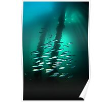 Fish schooling under the Rapid Bay jetty - South Australia Poster