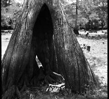 Cypress Cave by AnalogSoulPhoto