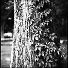 Cypress Vine by AnalogSoulPhoto