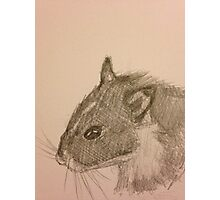 Hamster Drawing Photographic Print