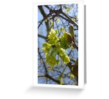 Flowers Blossoming On A Tree Greeting Card