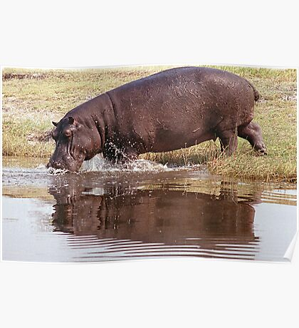 Charging Hippo Poster