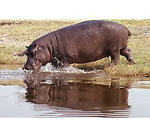 Charging Hippo Photographic Print