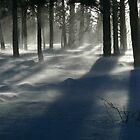 Wind & Shadows by Kim Barton