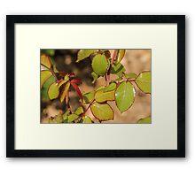 Little Leaves Framed Print