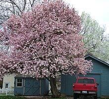 springtime by patticake