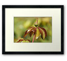 Leaves and Bud Framed Print