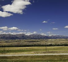 Montana Mountains and Cattle by Stacey Lynn Payne