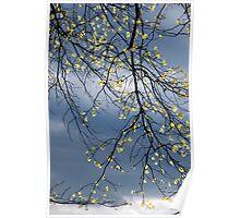 April Light Poster