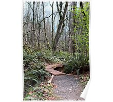Pathway Through Pacific Northwest Forest Poster