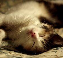 I iz sleepy sushidoll! by meowiyer
