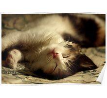 I iz sleepy sushidoll! Poster