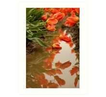Reflections of the Tulips Art Print