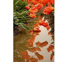 Reflections of the Tulips Photographic Print