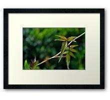 Vine Leaf-Rch Cucamonga, Ca Framed Print