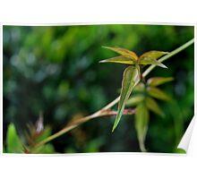 Vine Leaf-Rch Cucamonga, Ca Poster