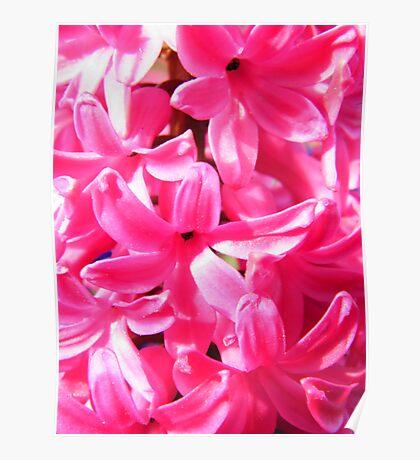 Pink Florets Poster