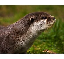 Otter Profile Photographic Print