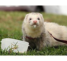 Frodo enjoying a fine white Photographic Print