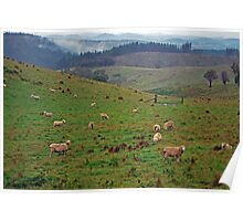 Just Grazing Poster
