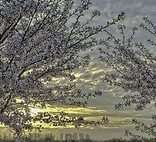TSURUMI RYOKUCHI KOEN AT SUNSET by Christophe Mespoulede
