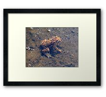 sometimes in sometimes out Framed Print