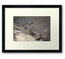 Crabs fight Framed Print