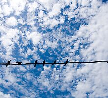 Birds on a wire by jayessaitch