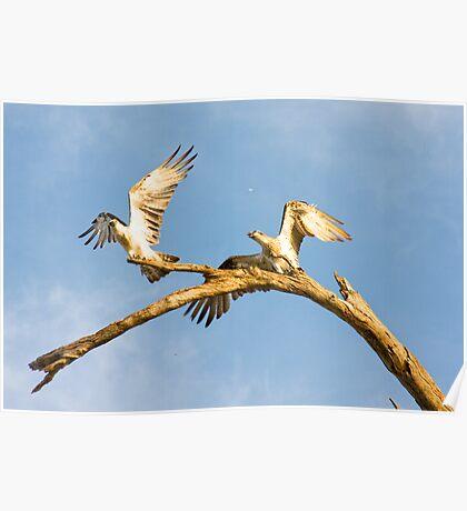 West Coast Eagles - Fremantle Poster