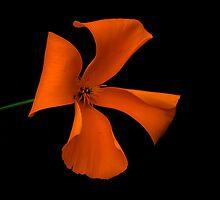 Flower of Eden by Richard Hamilton-Veal