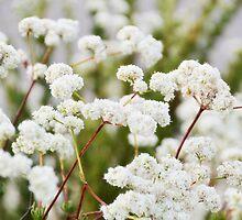 Jamul Flowers CALIFORNIA  by CaptureLight