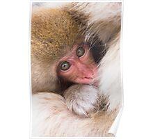 Baby Onsen Monkey Poster