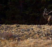 Bugling Bull Elk by JL Woody Wooden