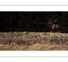 Bugling Bull Elk Sticker