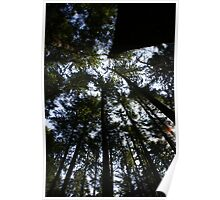 Tall Tall Trees Poster