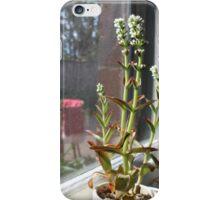 Succulent in a Coffee Shop iPhone Case/Skin