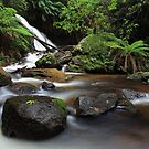 Koala Creek Cascade by Donovan Wilson