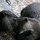 Otter Affection by Rowan Nancarrow