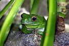 Little Frog Prince by yolanda