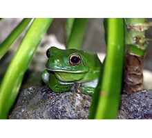 Little Frog Prince Photographic Print