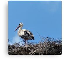 Stork in the Nest Canvas Print